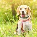 Hinweis-Aufkleber Hunde koten verboten I rund Ø 15 cm
